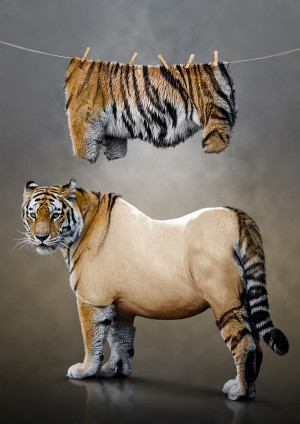Photo Manipulation – Tiger Undressed