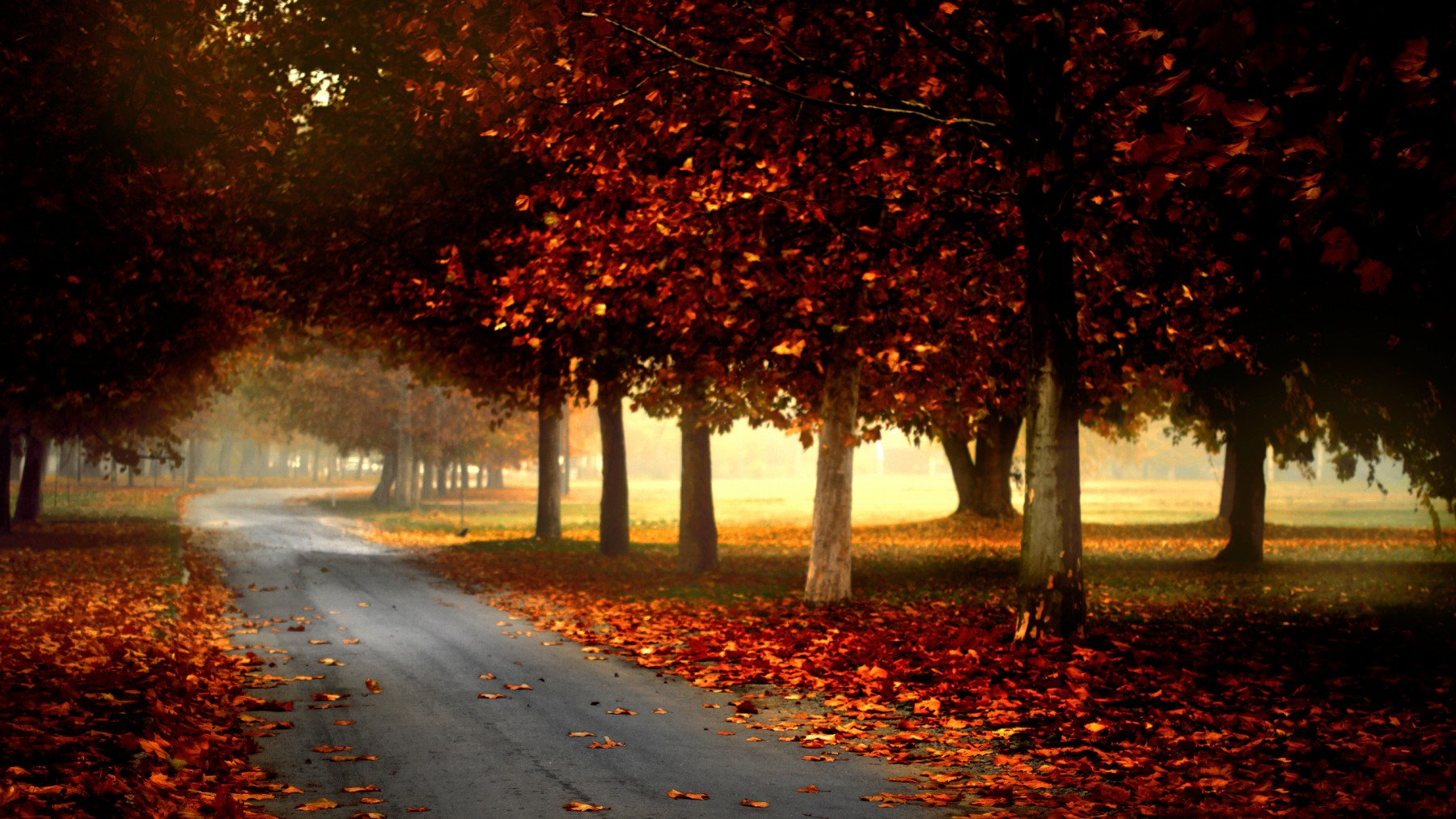 Autumn Park – Photography Wallpapers