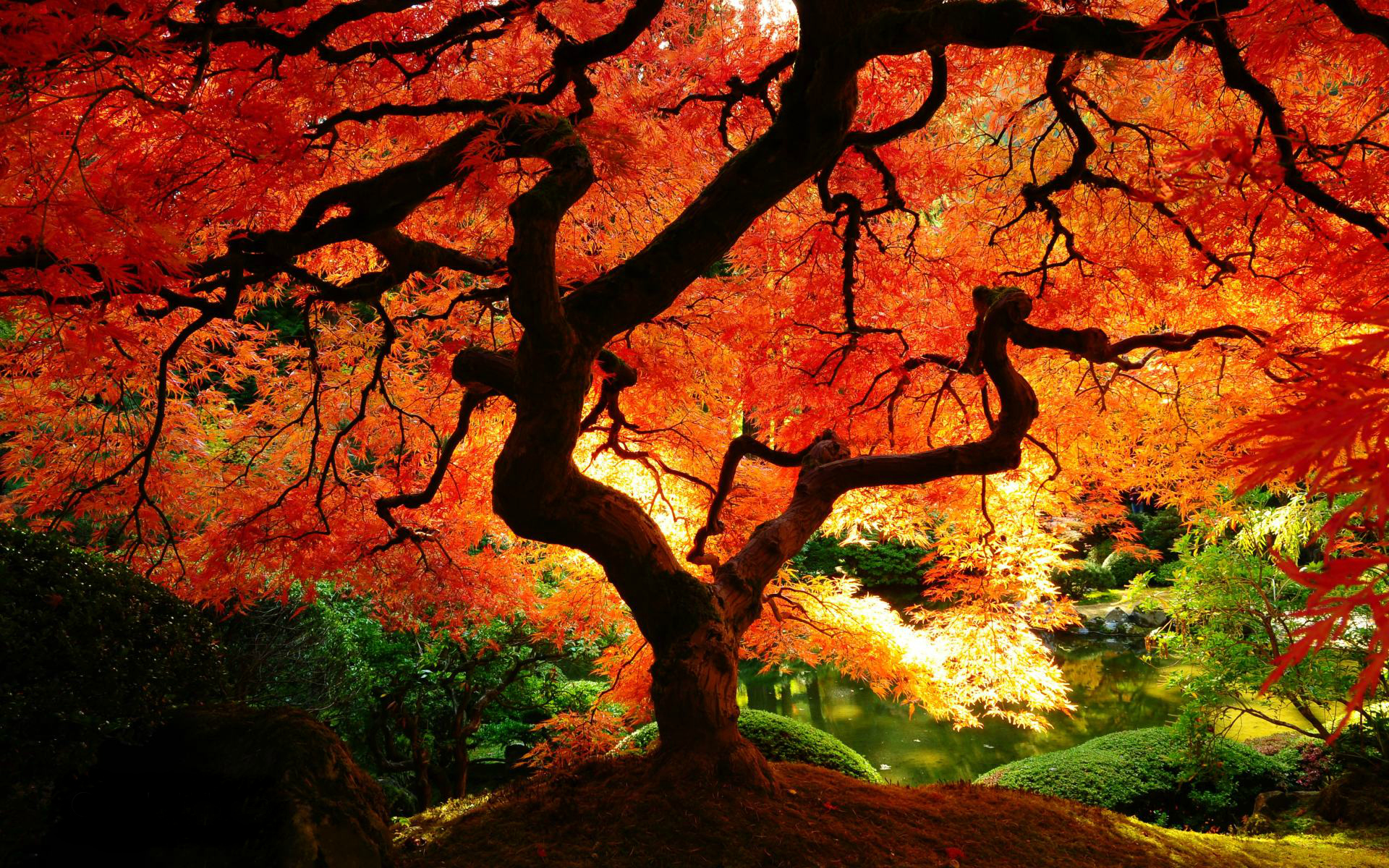 Autumn Forest – Photography Wallpapers