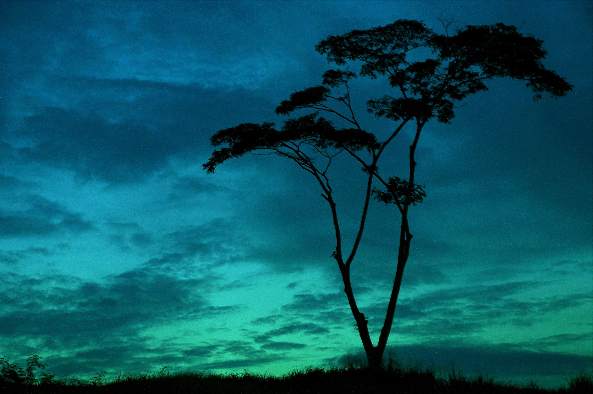 Tree Silhouette Against the Evening Sky – Photography Wallpapers
