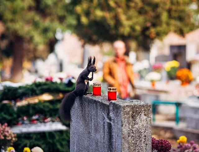 Cool and Funny Photography by Tamas Hajdu