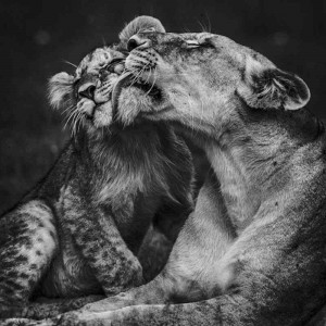 Baby Wild Animals by Laurent Baheux