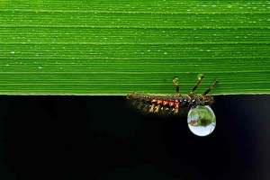 Macro Photography by Adam Dobrovits