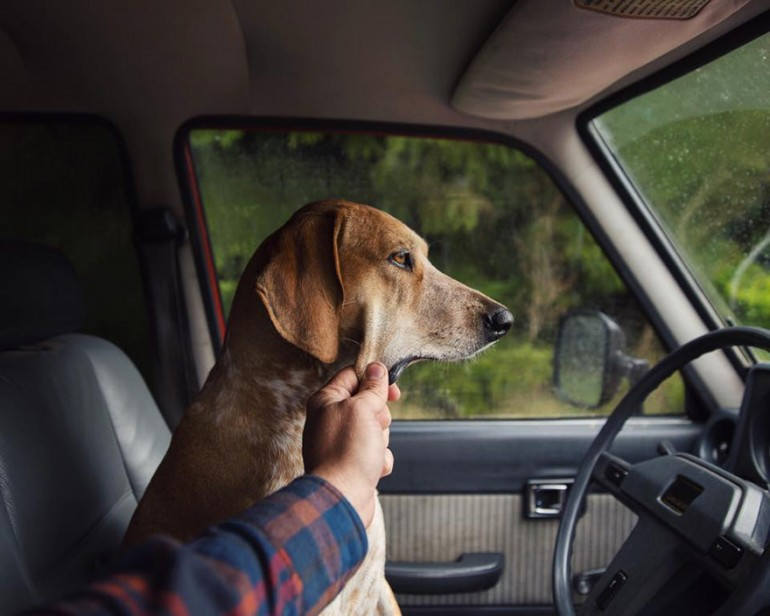 Photographer Takes His Rescued Dog Maddie On Epic Adventures