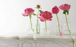 Beautiful Peonies – Photography Wallpapers