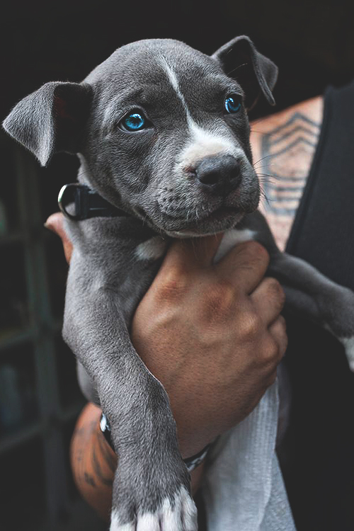 Blue Pit – Johnny Escobar