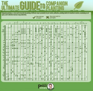This chart will help you understand how companion planting is done the right way with no hassle.