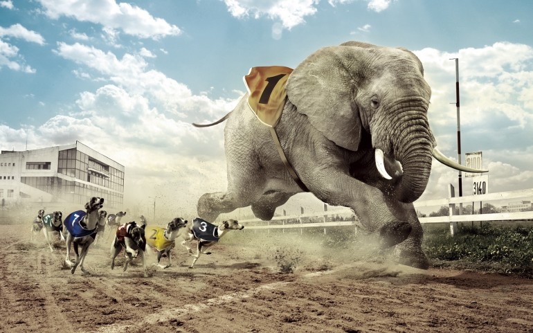 Dogs Racing an Elephant – Photography Wallpapers