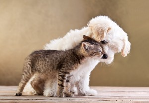 Friendship Between Dog and Cat