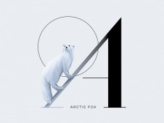 A for Arctic Fox