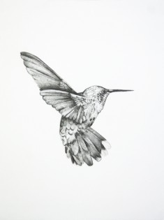 Bird Drawing by Shayle Flesser