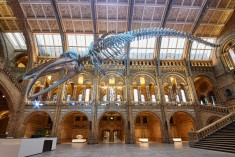 Blue whale at heart of Natural History Museum redesign