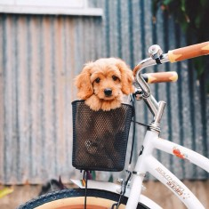 On a bike.. What adventures will we get up too next.. ☺️