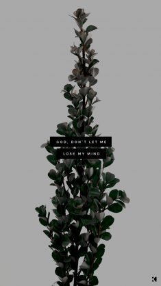 Wallpapers No. 417 – Cage The Elephant Lyrics