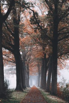 Foggy Autumn Path