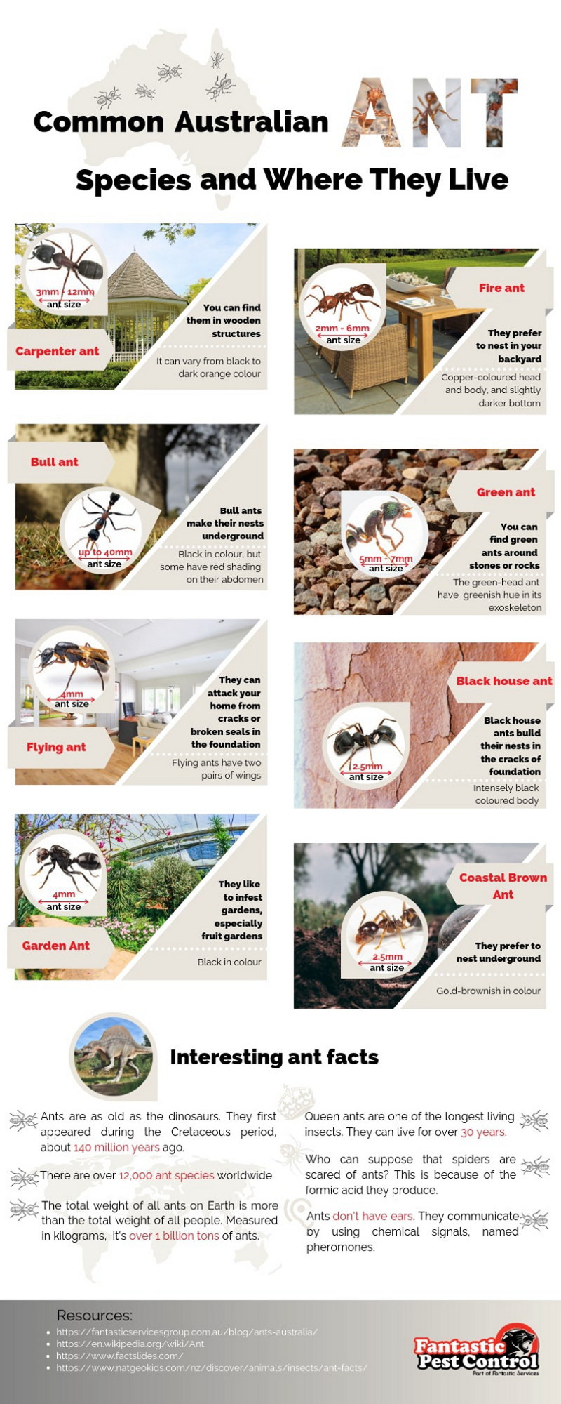 Common Australian Ant Species and Where They Live