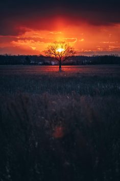 Lone Tree by brymnr