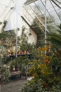 A greenhouse in a botanical garden in Oxford, UK.