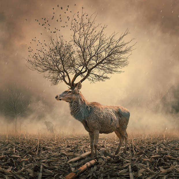 Imaginary Surreal Photo Manipulation