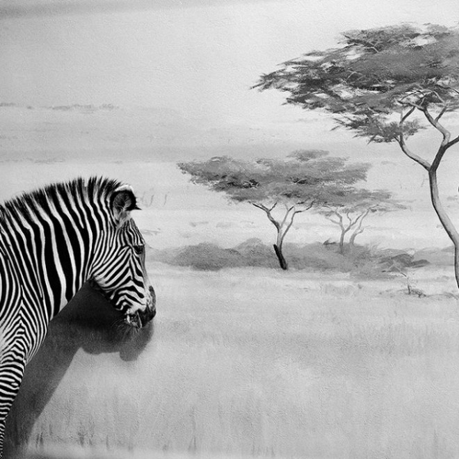 Black and White Animal Photography by Andrea Alessio