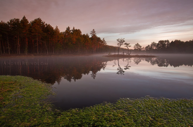 Nature Photography by Andrei Reinol