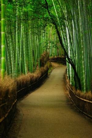 Tenryū-ji bamboo forest – Kyoto