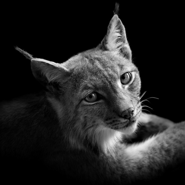 BW Animals Portraits by Lukas Holas