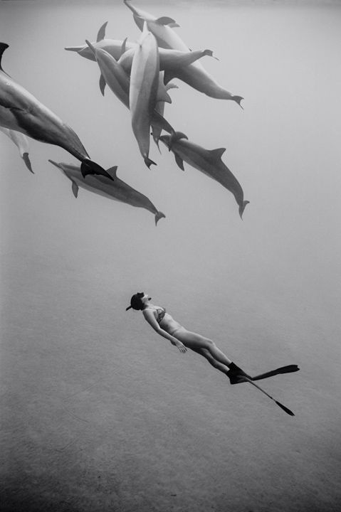 fish, scuba diver