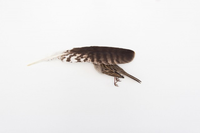 Still Life Photography by Kai Aragaki