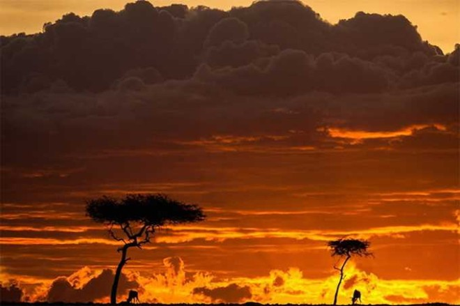 Sunsets in Kenya by Paul Goldstein