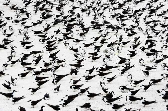 Bird Photography by Stefano Unterthiner