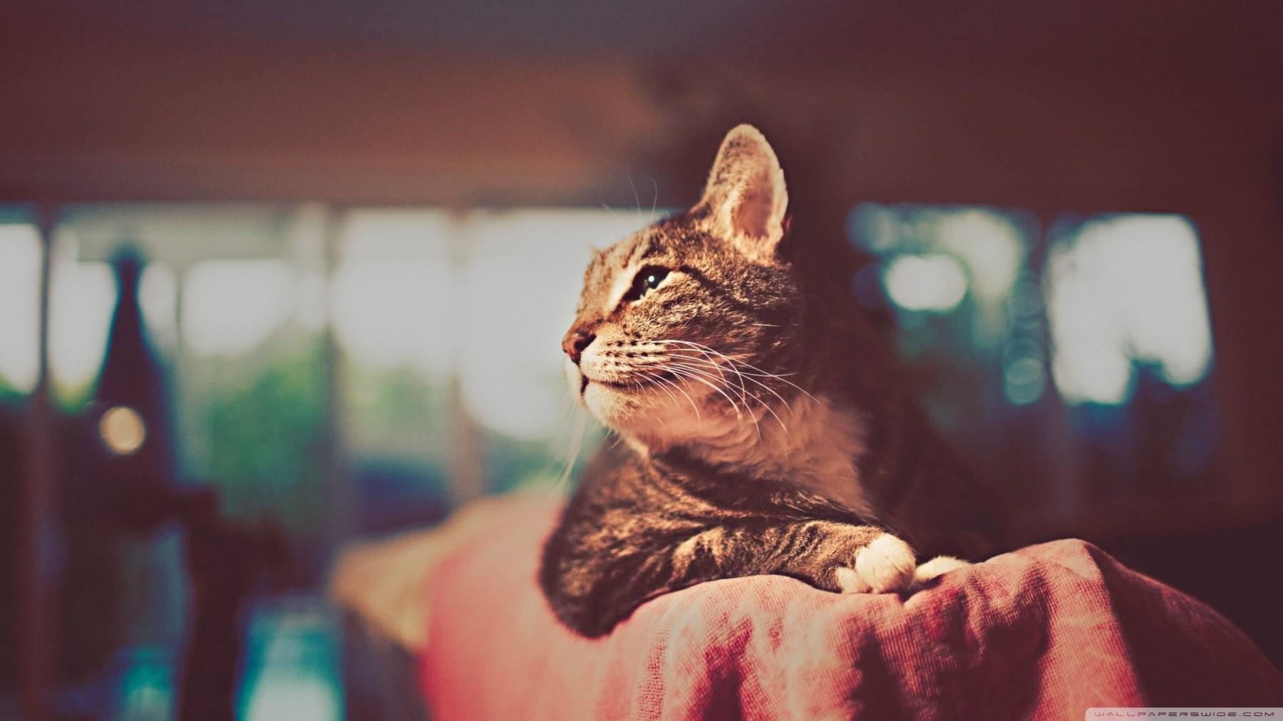 Bokeh Cat Portrait – Photography Wallpapers