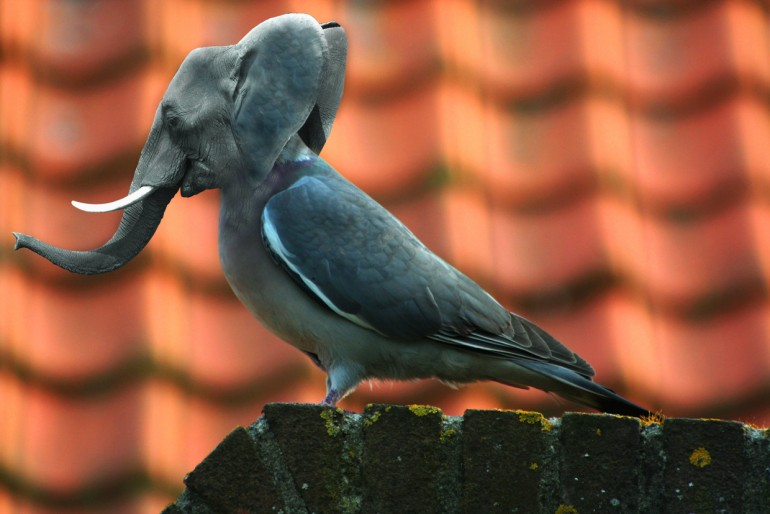 Elephant mixed with a pigeon