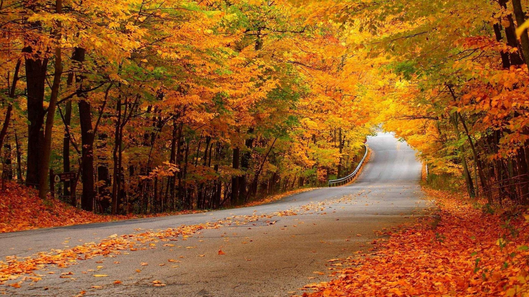 Woods Road Landscape – Photography Wallpapers