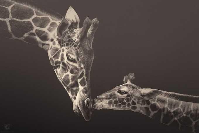 Zoo Animals by Manuela Kulpa