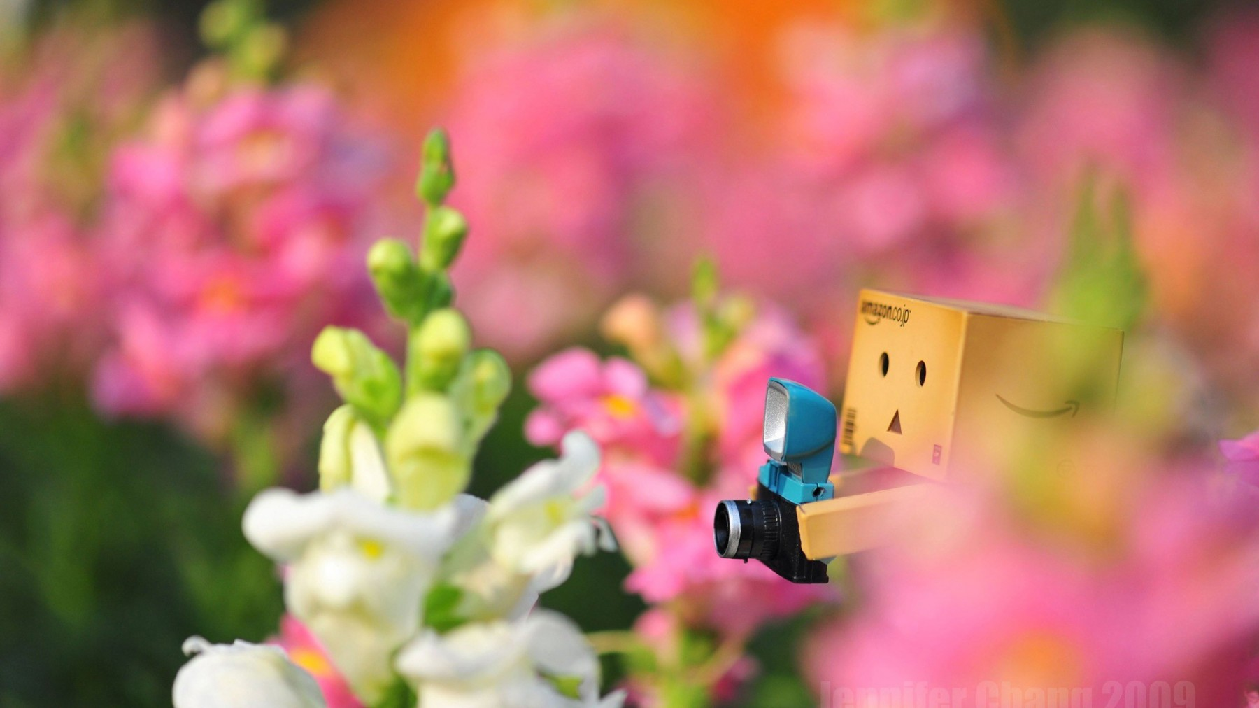 Danbo Among the Flowers – Photography Wallpapers