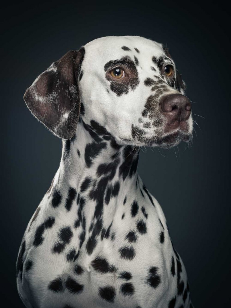 Dog Portraits by Klaus Dyba