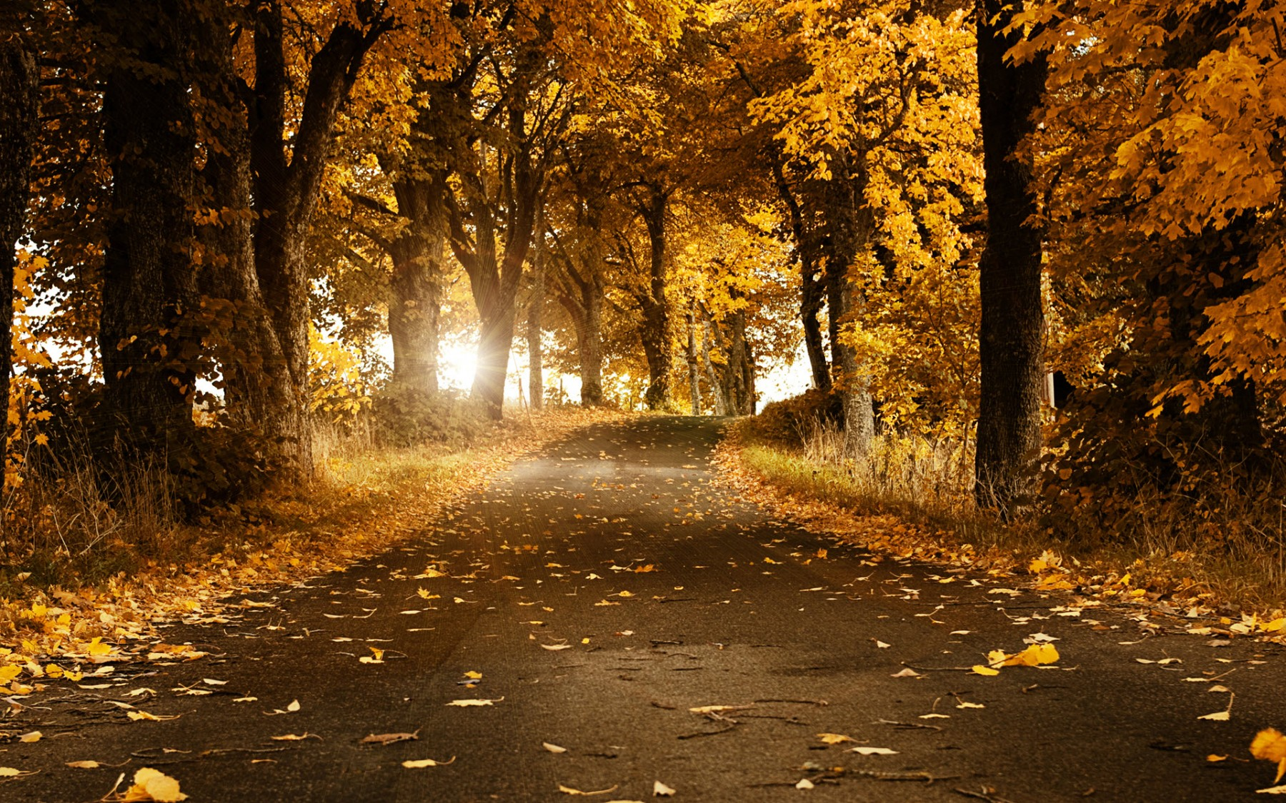 Empty Forest Road – Photography Wallpapers