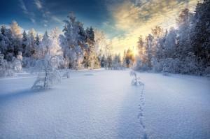Winterby Mikko Lagerstedt