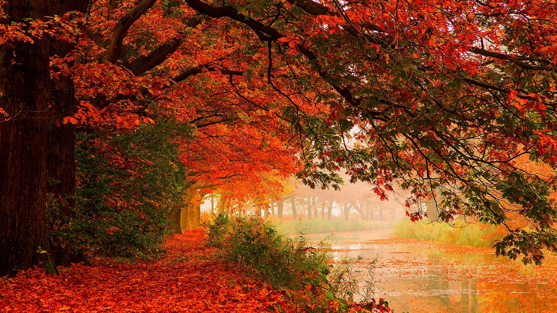 Autumn Forest Colors – Photography Wallpapers
