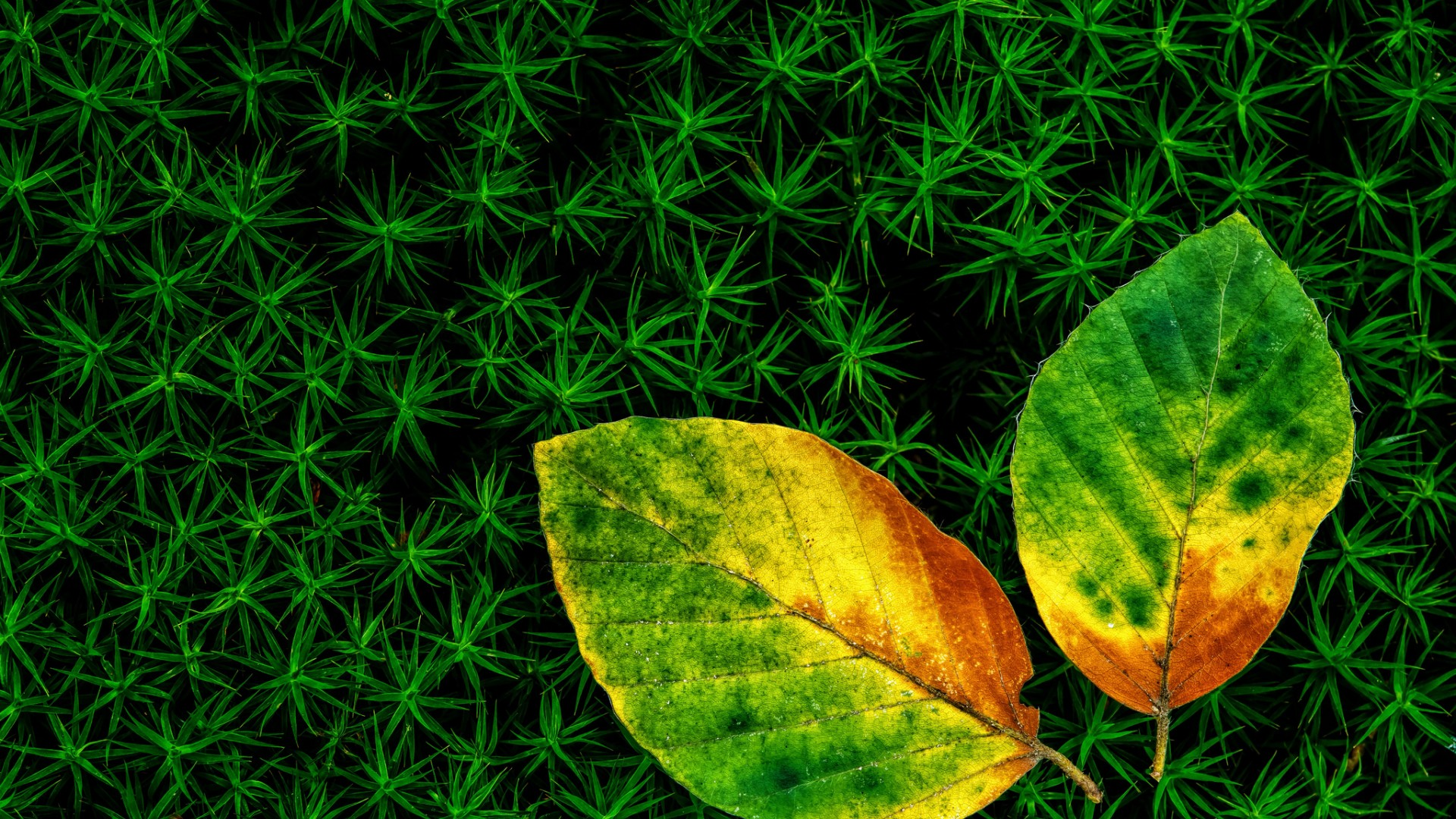 Fallen Leaves on Green Moss – Photography Wallpapers