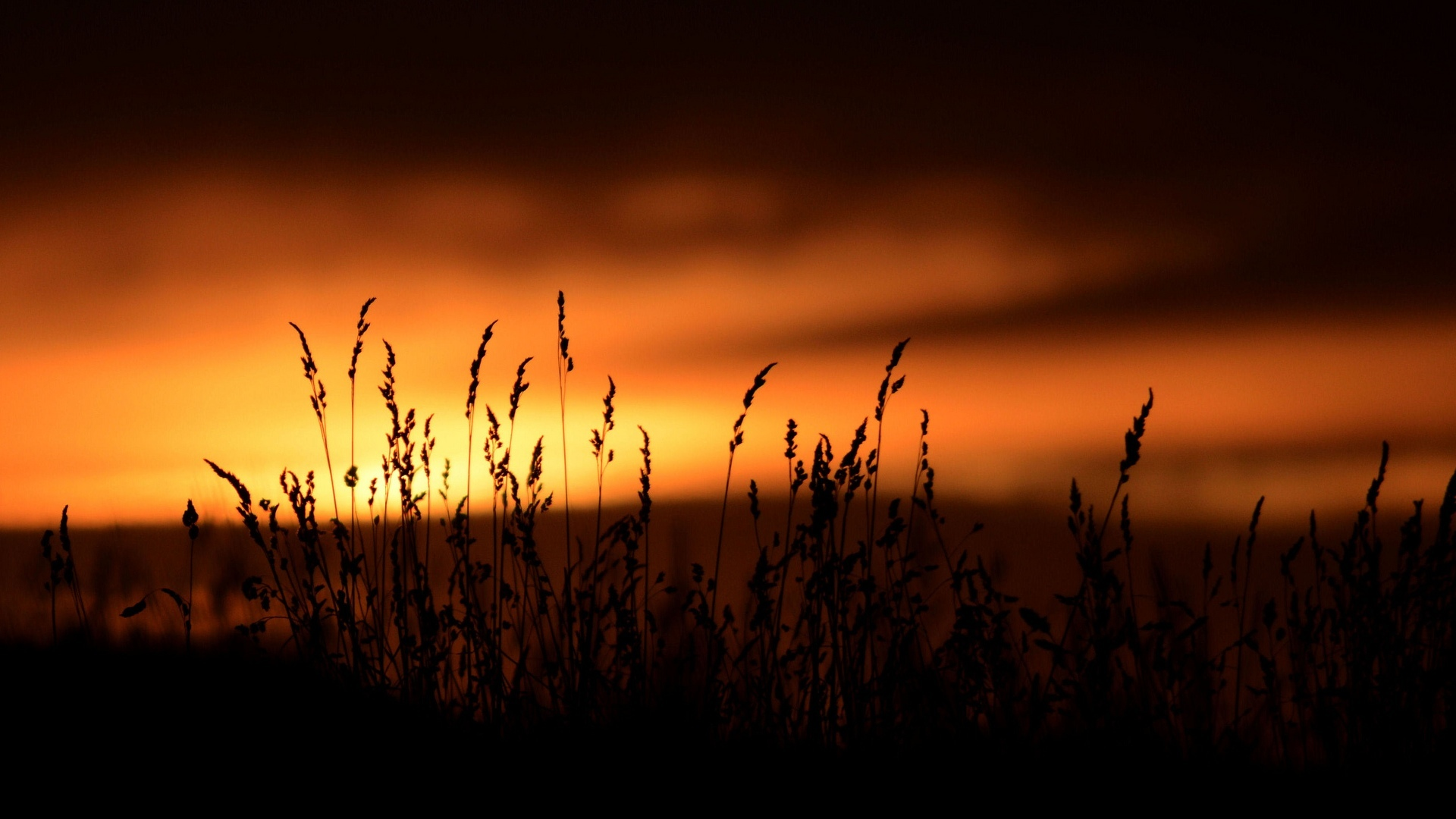 Field Grass With Sunset Background – Photography Wallpapers