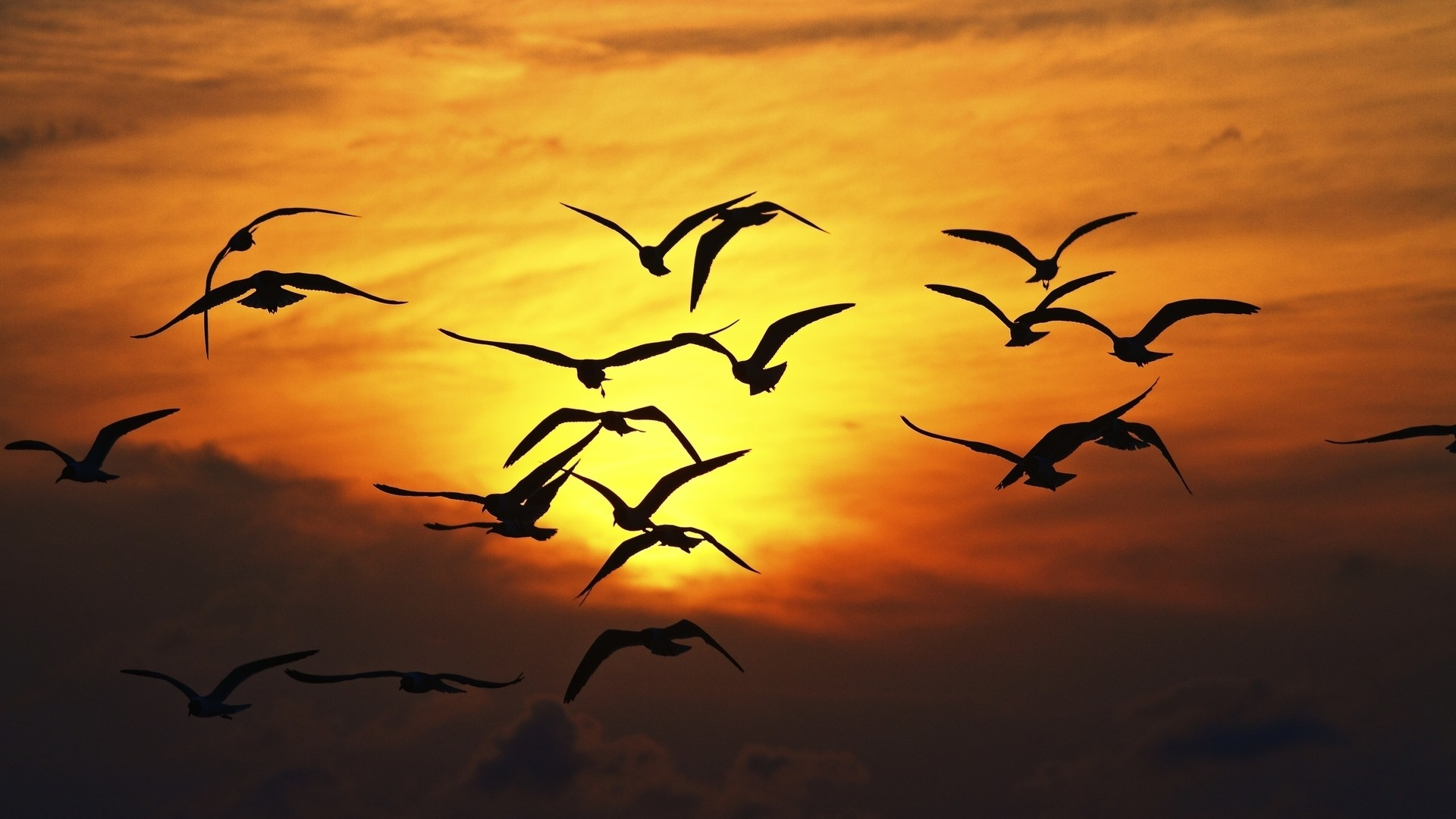 Gulls in The Sunset Sky – Photography Wallpapers