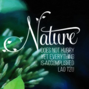 Nature does not hurry, yet everything is accomplished. Lao Tzu
