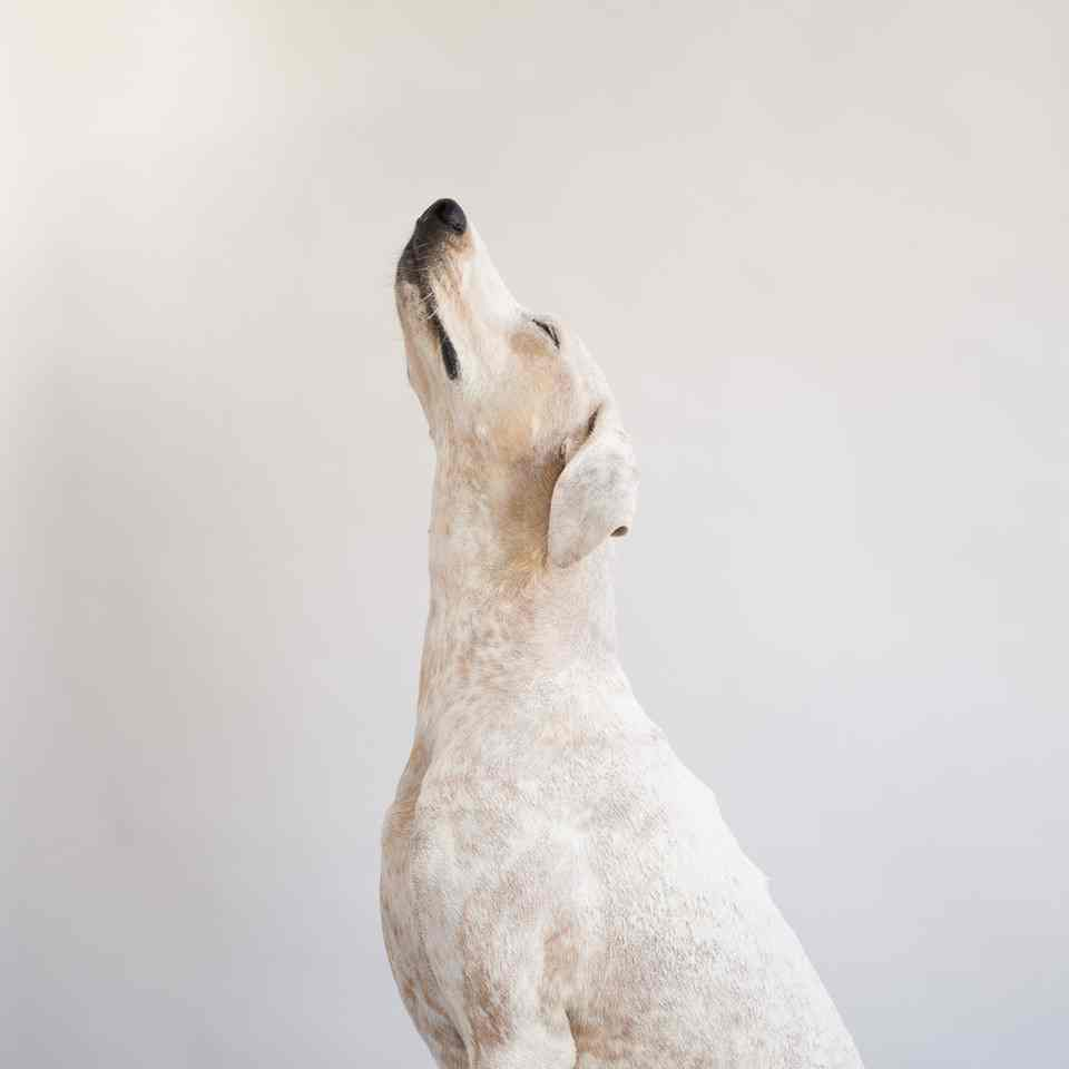 Maddie The Coonhound by Theron Humphrey