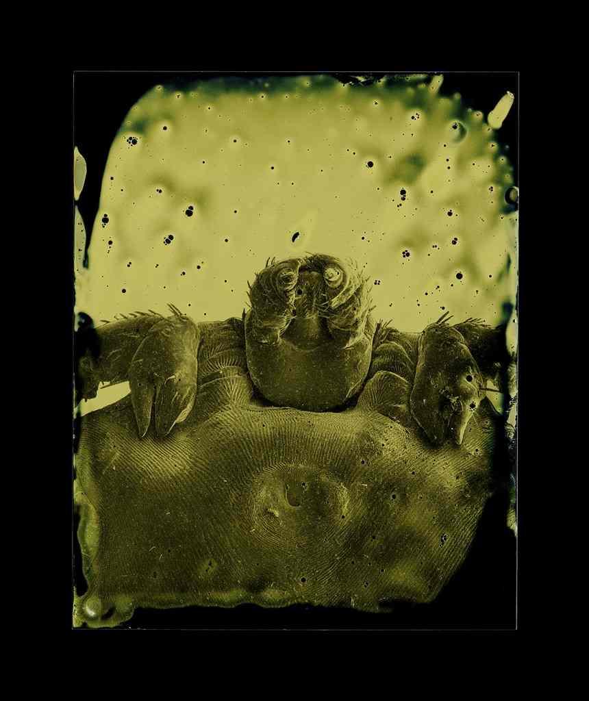 Parasites by Marcus DeSieno