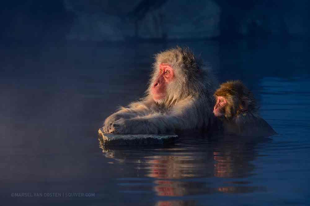 Wild Animals Photography by Marsel van Oosten