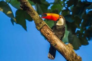 Beautiful Birds Photography by Bertrando Campos