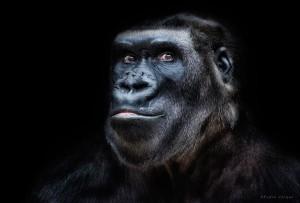 Animal Portraits by Pedro Jarque Krebs