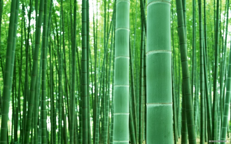 Bamboo Forest Landscape – Photography Wallpapers